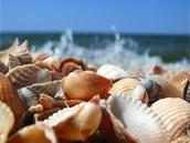 Conchas de mar por la orilla del mar
