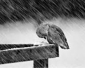 Hurricanes damaging birds