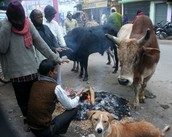 Animals and people warming up around a fire on the street