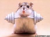 Hold hamster
