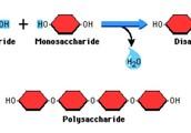 Name of Biomolecule