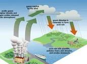 Acid Rain & Global Warming (4.9 Note)