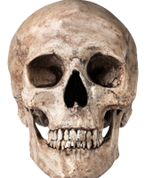 Skulls are stereotypical