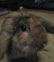 My rabbit