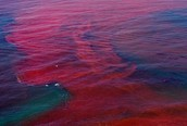 What is a harmful Algal Bloom and what causes it?