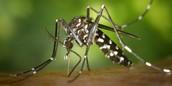 Fiebre de Chikunguya