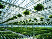 A Large Green House
