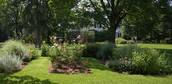 Miss.Coopers Garden