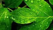Transpiration can happen to all kinds of plants