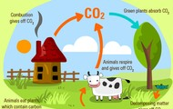 diagram on the carbon cycle