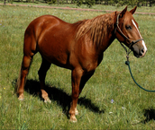 this horse is available right now come get her/him