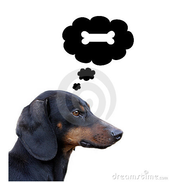 A dog is thinking!