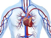 Issues and illnesses of the cardiovascular system