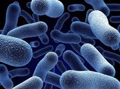 Have you ever wondered what pathogenic fungi looks like and what their purposes are?