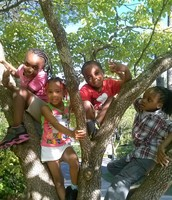 The kids love the tree in front of the house.