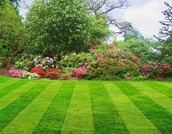 Our landscape design and lawn care service professionals are the best in town!
