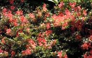 ElmAgos garden in Udine...