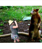 """That is one big tree kangaroo!"""