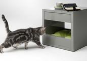 Todo tipo de muebles para su animal de compañía, accesorios y alimento premium.