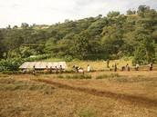 衣索比亞有機日曬列坎普提G3尼溝索農場     (售價520/225G)