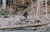 History about Bigfoot