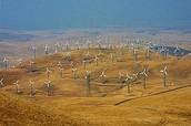 A Large Wind Farm