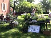 Plant Sale Table