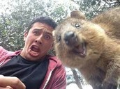 Known Quokka Information