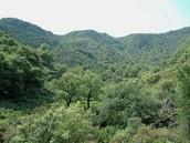 Bosque Mediterráneo.