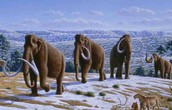 Mammoths looking for food in the winter