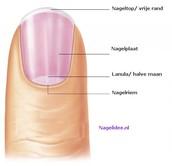 De nagel