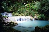 French Guiana rainforest