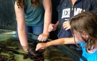 Petting a shark.