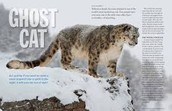 Help save them don't harm the snow leopards