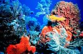 Natural Coral Reef Preserves