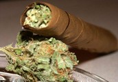 Marijuana- Nicknames
