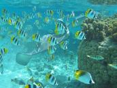 A snorkel safari