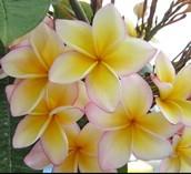 Lei flower