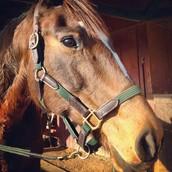 My horse Georgia
