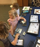 Charleston Museum's Bug Day