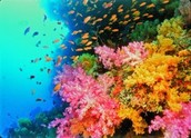 Coral Reef in South Africa
