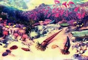 Coral reef of time period