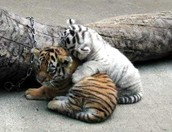playing/cuddling