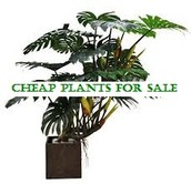 Cheap Plants For Sale Have Remarkable Buy Plants Online For Distribution Anywhere