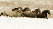 How long can a horse live and what is the fastest recorded speed?