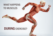 How to increase muscluar endurance