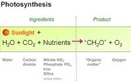 this is an example of the equation of photosynthesis
