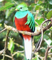 Bird that lives in the rainforest
