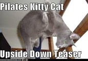 We Are Purr-Fect Pilates- Please Join Us!!!