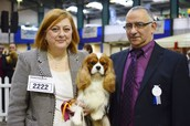 AKC GCH, CKCSC, USA CH and UK CH Brookhaven Believe It Or Not!